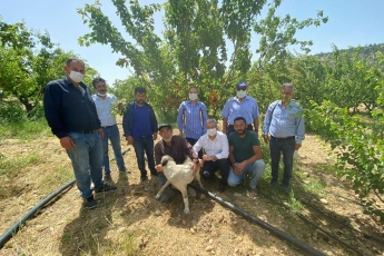 Mut ilçemizin Kemenli köyünde dolu afetinden zarar gören çiftçilerimizi Mut ilçe başkanımız Hayati Bağçalı ve yöneticilerimizle beraber ziyaret ettik.